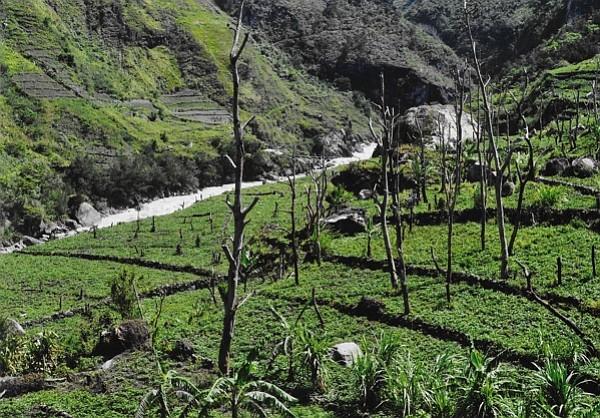 A village garden in Papua
