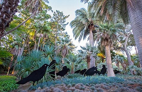 """<b>BIG BIRDS:</b> """"Murder of Crows"""" is an artwork that's recently been installed in Lotusland's blue garden as part of <i>Flock</i>."""