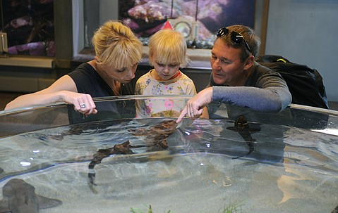 Margaret, Addison, and Andy Atkinson, visiting from Florida, check out the shark touch-tank at the Sea Center.
