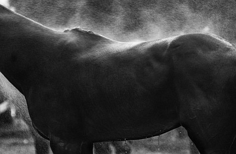"""Polo Study #6"" by Kim Reierson"