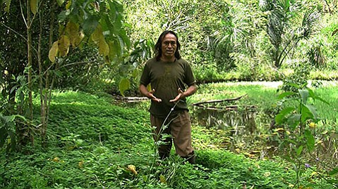 """<b>JUNGLE LOVE:</b>  Pictured above is a video still from the art project """"The Land Grant: Forest Law"""" by Ursula Biemann and Paulo Tavares."""
