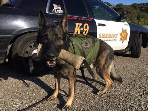 Longtime Sheriff's K-9, Gango, retired Monday after 7 years on the force.