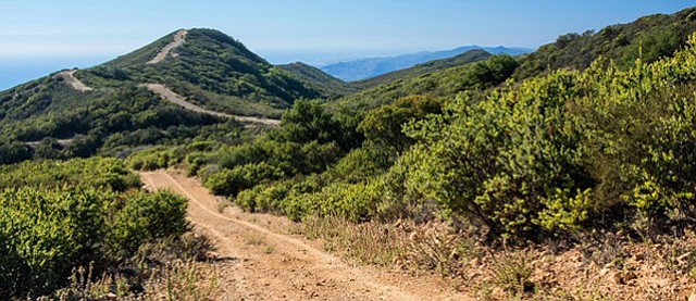 <b>HOT TOPIC:</b>  Wildfire prep plans call for the widening of this Gaviota firebreak. But how to balance the protection of Refugio manzanita?