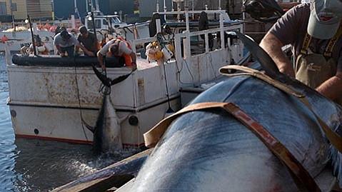 <em>Bluefin</em>