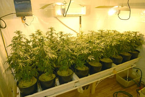 Far from a typical closet marijuana growing operation, medical marijuana gardens-enjoying the freedoms of state legal status-often employ sophisticated technologies to produce some of the highest-grade marijuana known to humans.