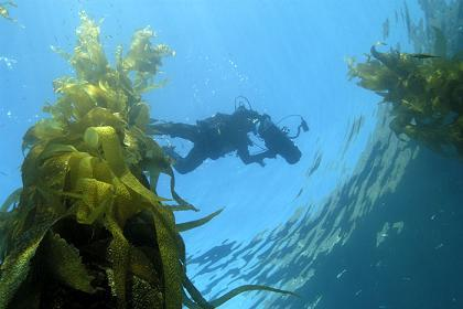 Scuba diving off the coast of Anacapa Island