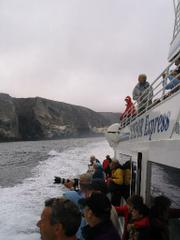 Passengers on the Condor Express this summer have seen amazing amounts of blue whales.