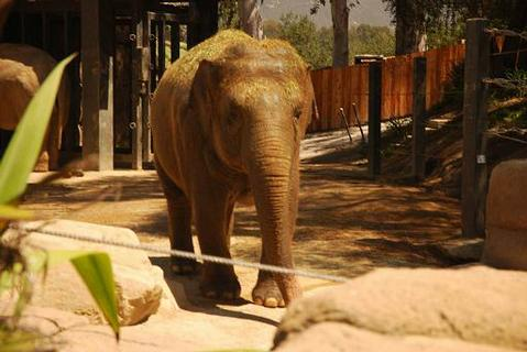Elephant and the Santa Barbara Zoo