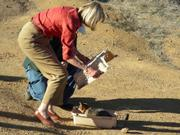 Rep. Lois Capps uncovers a fox cage.