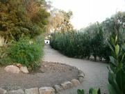 The trail through San Ysidro Ranch.