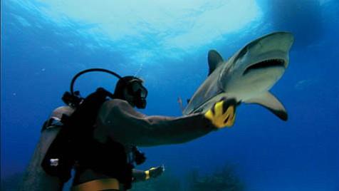 <em>Sharkwater</em>