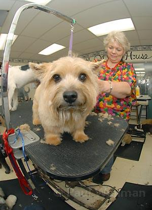 Owner Annabelle Hofmann gives this cutie a good cleaning at The Little Dog House.