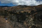 Several members of the Volunteer Wilderness Rangers head into the San Rafael Wilderness near Flores Flat to survey the fire damage done to the riparian areas.