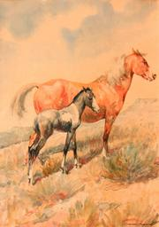 """""""Pinto Horse #2"""" (Alternate illustration for cover of <em>The Pinto Horse</em>by Charles Elliot Perkins) watercolor."""