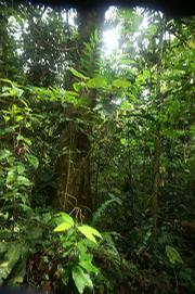 Thick jungle on the hills of Volcan Baru, near where the plane crashed.