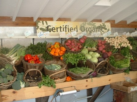 Organic produce on display at Fairview Gardens.
