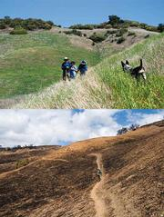 Above: Grass grew abundantly on the slope that the Santa Cruz Trail cut through. 