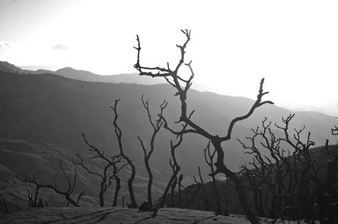 The author contributed many photos for our coverage of last year's Zaca Fire.