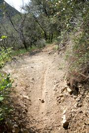 Mountain bikes cause the trail to become grooved when they speed down the trail and brake hard into the corners.