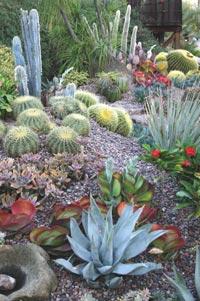 Debra lee baldwin 39 s designing with succulents - Succulent container gardens debra lee baldwin ...