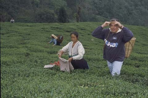 David De Candia went to India to learn more about tea and to see how it is picked.
