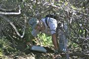Kalon Kelley crawls through the brush near Gaviota to check out a potential route for a trail near the County Land Fill just east of Arroyo Hondo. Not only is it tough going but the brush beneath the surface cover is ready to burn.
