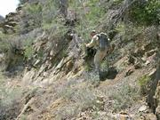Rik begins to negotiate a section of trail that has lots of erosion damage.