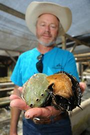 Ben Beede grows the snails in a facility along the coast near Goleta.