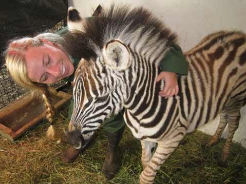 Laguna Blanca's Melissa Schmitt hangs out with zebras in South Africa.