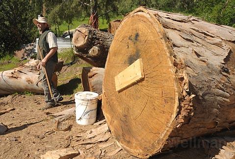 Rob Bjorklund at his sawmill