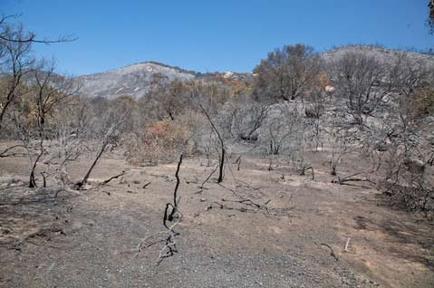 The aftermath of the 2008 Gap Fire.