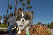 2006&#39;s Big Dog Parade
