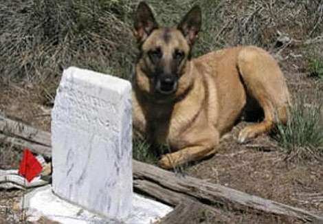 Legend, a Belgian Malinois, is a Human Remains Detection Specialist
