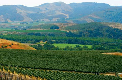 Longoria Winery's pinot vineyard in Lompoc.