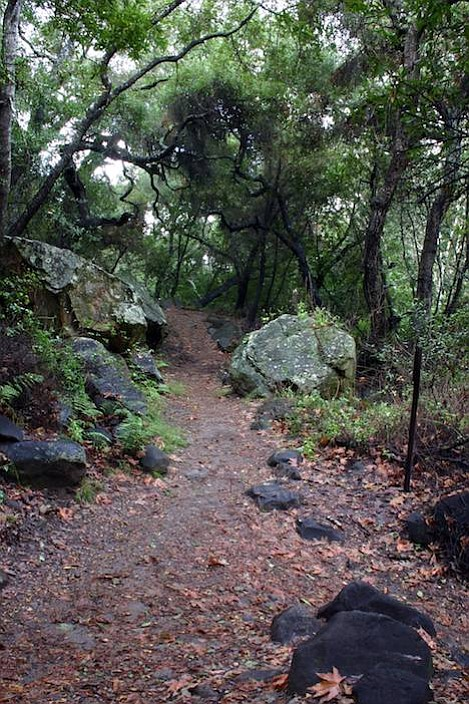 Misty light and a coating of rain makes trails such as this in Cold Springs Canyon a delight to explore.