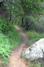 To reach Tangerine Falls, follow the West Fork Trail for 3/4 mile to the turnoff.