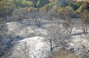 Lower part of Rattlesnake Canyon Trail after fire burned across it.