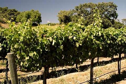 Sunstone Vineyards & Winery (Santa Ynez Valley, Santa Barbara County)