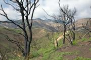 Slideshow will depict impacts of the Tea Fire on local trails.