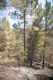 Pine forest just after first crossing in Rattlesnake received minor damage.