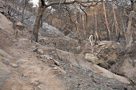 Large portions of the Jesusita canyon trail above Moreno Ranch were burned heavily, leaving slides and rockfall issues along many sections.