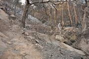 Much of the San Roque side of Jesusita Trail has been burned severely as well.