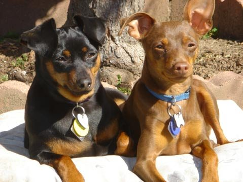 The Swains' dogs Abby (left) with the now missing and presumed dead Radar.