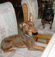 Radar (left) and Abby wait for supper.
