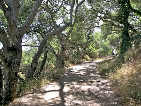 Oak Grove Trail provides a beautiful entryway up to the Douglas Preserve.