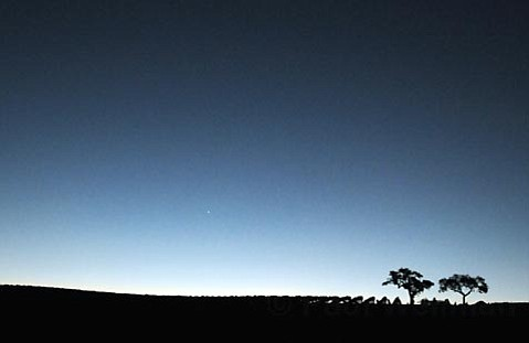 Dawn breaks on the vineyard.