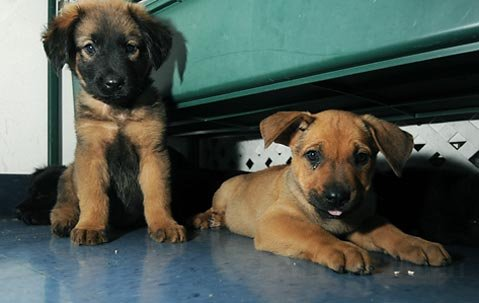 Rescue puppies settling in at the Montecito Pet Shop