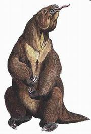 A great variety of enormous mammals roamed these lands until their sudden mass extinction 10,000 to 12,000 years ago.