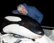 "During the filming of ""Call of the Killer Whale,"" Jean-Michel Cousteau and the Ocean Futures Society team assisted in the successful rescue in New Zealand of a stranded orca, which they named Rakey. It has been shown that orca who strand and are quickly treated and released can survive in the wild and even thrive."