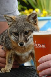 "Santa Barbara Zoo hops to its first ""Zoo Brew"" fundraiser."